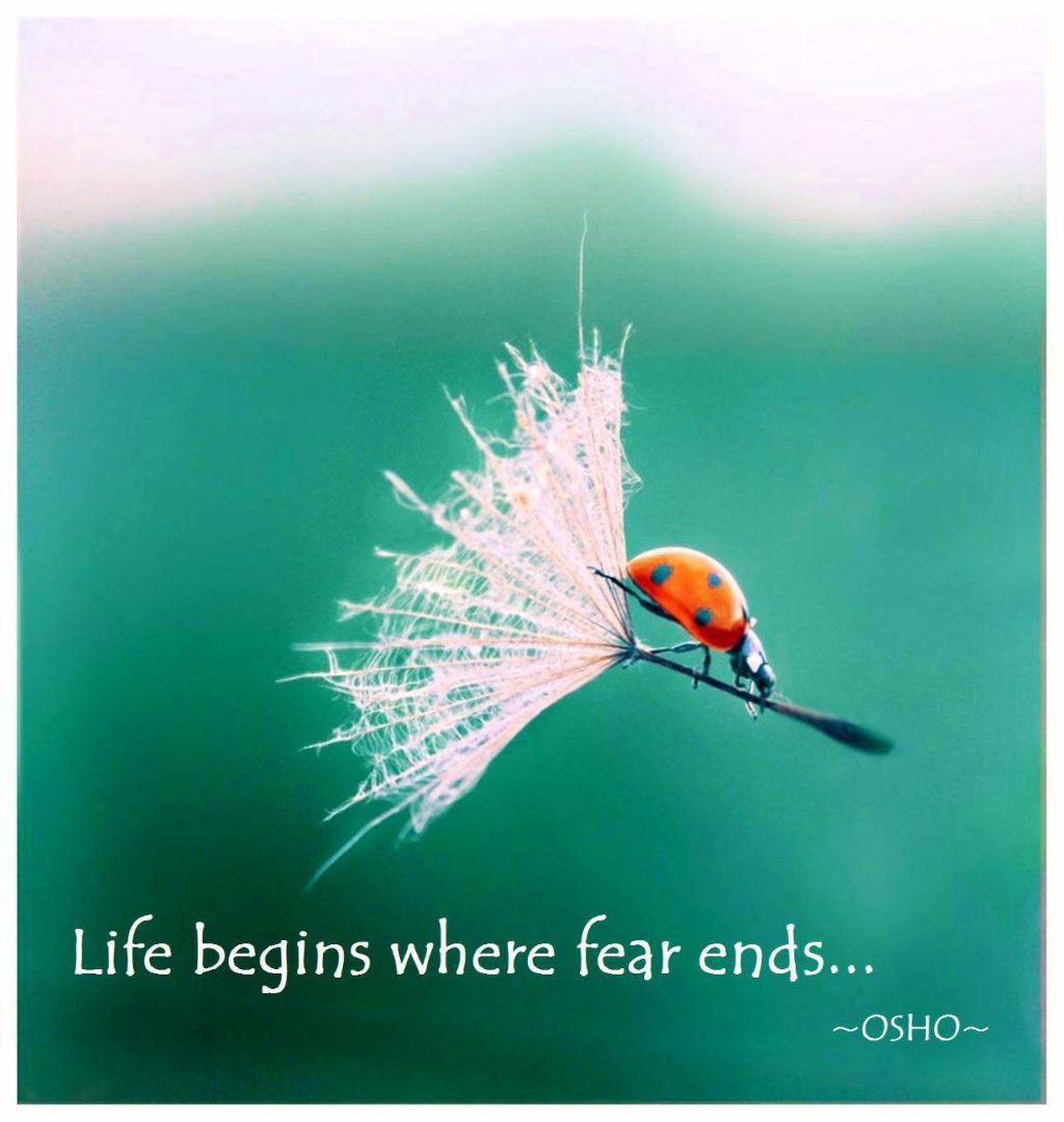 Yoddler life begins where fear ends wisdom life motivational fear quote osho - The house in which life starts over ...